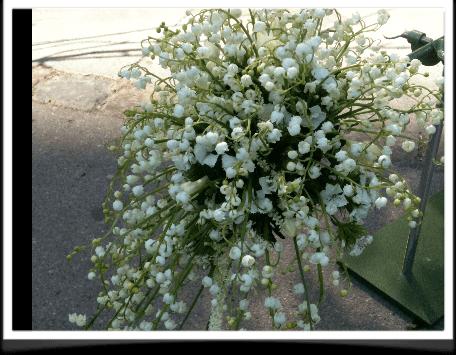 Liljekonvaller i brudebuketten