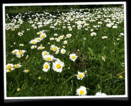 Andre blomster og dekortioner til brylluppet